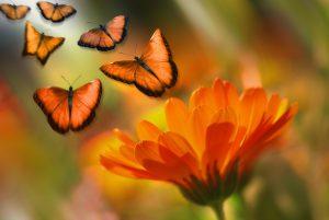 butterfly-1327814_960_720